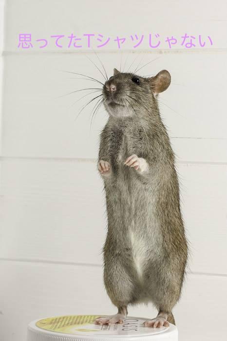 ネズミ 映像制作・動画制作ブログ