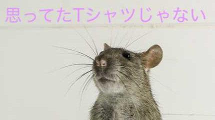 ネズミ「思ってたTシャツじゃない」